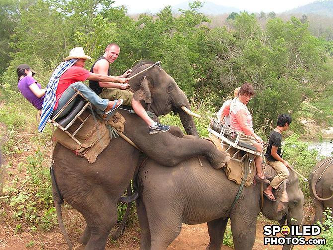 Секс слонов. Постоянная ссылка: Не думаю что это обещали в тур. агентстве.
